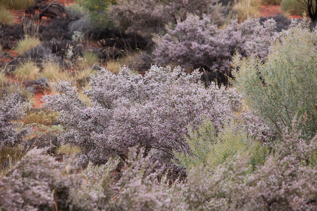 Australia:  Day 4 – Travel Day to Ayers Rock