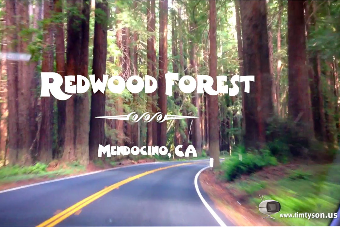 Mendecino Redwood Forest Play Button No Button