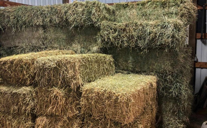 Three Different Types of Hay? Hm. News to Us!