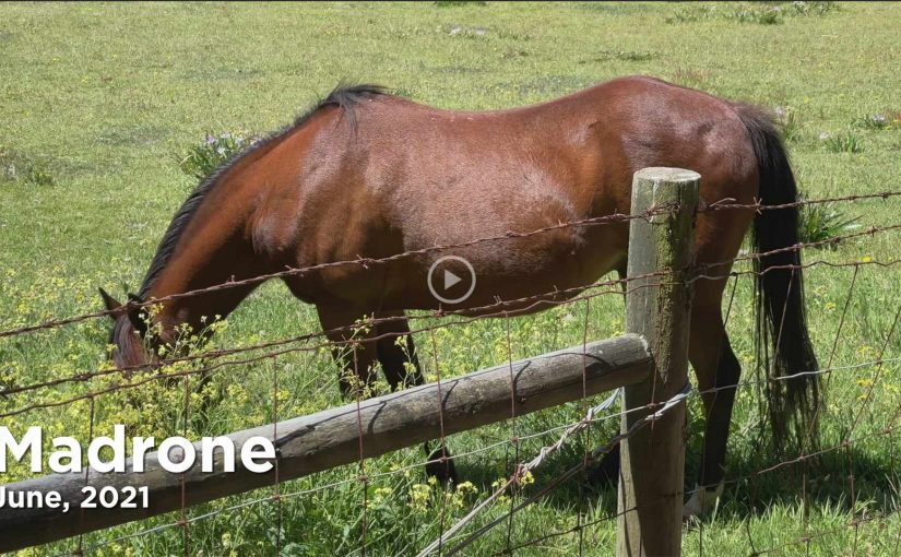 Our Horse, Madrone